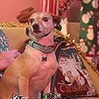 Taco in Christmas Freak (2021)