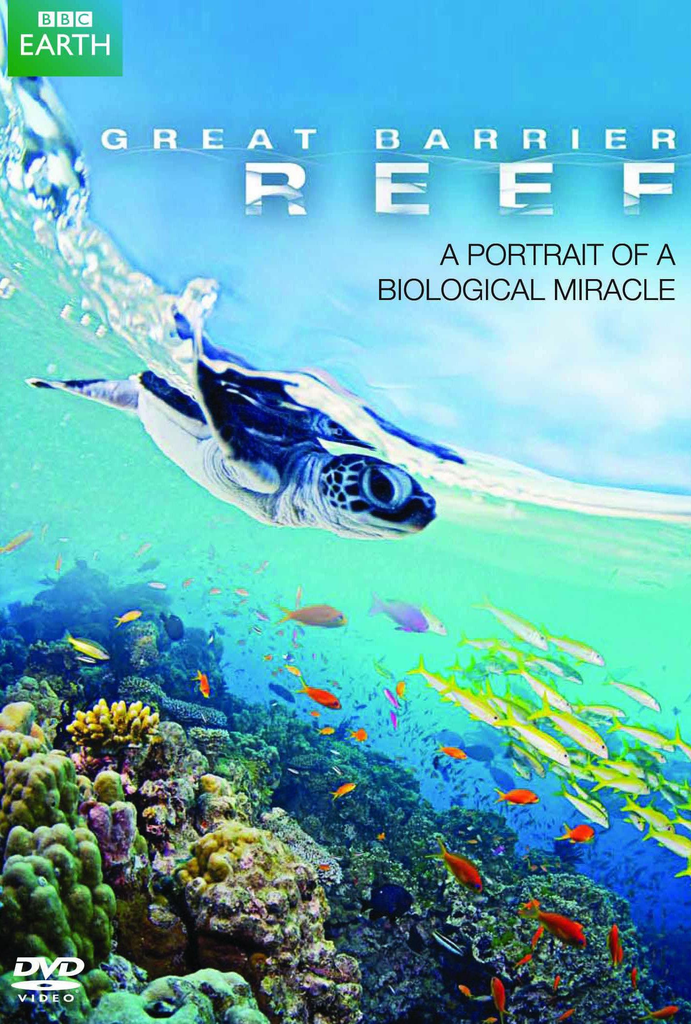 beste authentiek origineel klassieke schoenen Great Barrier Reef (TV Series 2012– ) - IMDb