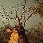 Das geheime Leben der Bäume (2020)