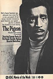 The Pigeon Poster