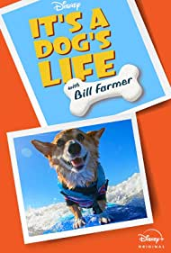 It's A Dog's Life (2020)