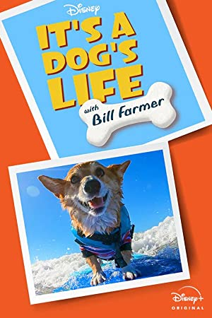 Its a Dogs Life with Bill Farmer