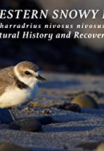 Breakthrough: The Snowy Plover and the Oil Spill
