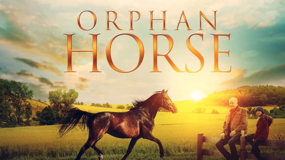 orphan horse 2018