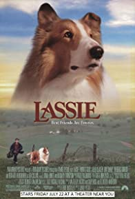 Primary photo for Lassie