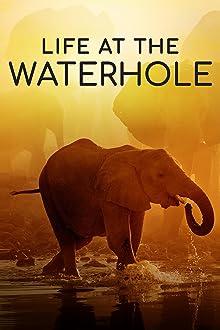 Life at the Waterhole (2021– )