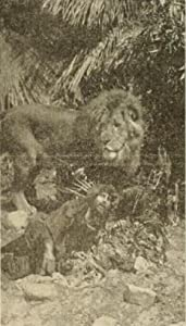 The Mysterious Man of the Jungle USA