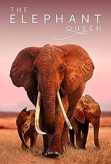 The Elephant Queen (2019)