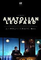 Anadolu Leopari