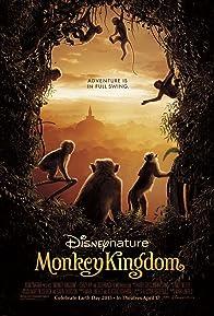 Primary photo for Monkey Kingdom