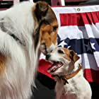 Lassie and Uggie at an event for The Artist (2011)