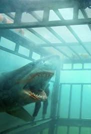 Shark Night Cast: Shark Bite