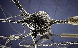 Neurogen Research Foundation
