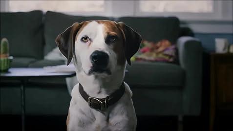 Downward Dog (TV Series 2017) - IMDb