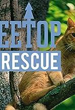 Treetop Cat Rescue