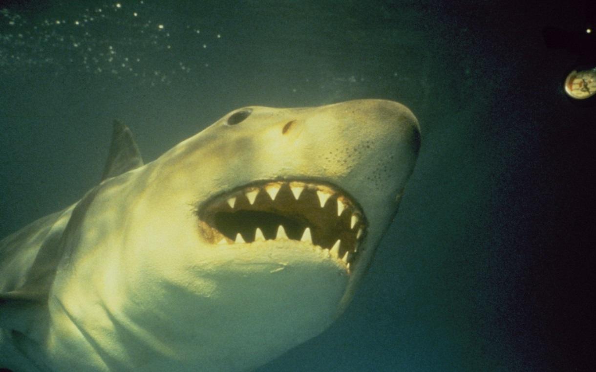 Fălci 3 - Jaws 3-D (1983) Online Subtitrat in Romana