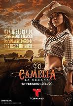Camelia La Texana