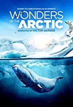 Wonders of the Arctic 3D