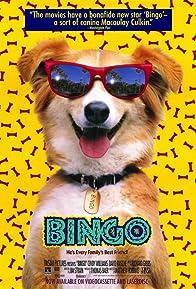 Primary photo for Bingo
