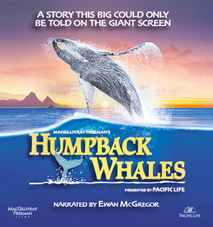Permalink to Movie Humpback Whales (2015)