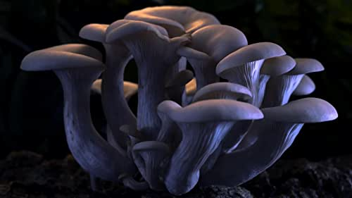 Fantastic Fungi is a consciousness-shifting film that takes us on an immersive journey through time and scale into the magical earth beneath our feet, an underground network that can heal and save our planet.  Through the eyes of renowned scientists and mycologists like Paul Stamets, best-selling authors Michael Pollan, Eugenia Bone, Andrew Weil and others, we become aware of the beauty, intelligence and solutions the fungi kingdom offer us in response to some of our most pressing medical, therapeutic, and environmental challenges.