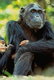 The New Chimpanzees (1995)