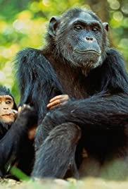 The New Chimpanzees Poster