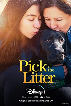 Where to stream Pick of the Litter