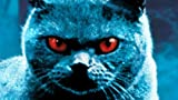 MovieWeb: Details on the 'Pet Sematary' remake