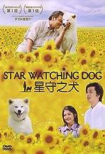 Star Watching Dog