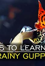 Things to Learn from Brainy Guppies