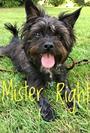 Mister Right Poster