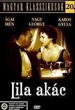 Lila akác
