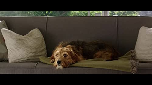 'Dog Days' follows a group of interconnected people in Los Angeles who are brought together by their lovable canine counterparts.