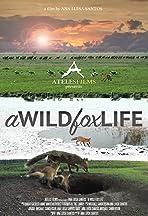 A Wild Fox Life