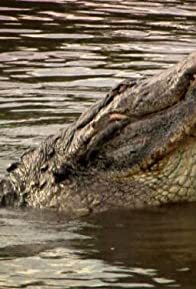 Primary photo for Gator Attack