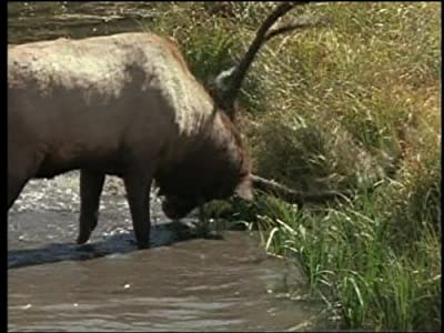 Watch online stream movies Valley of the Elk [1280x768]