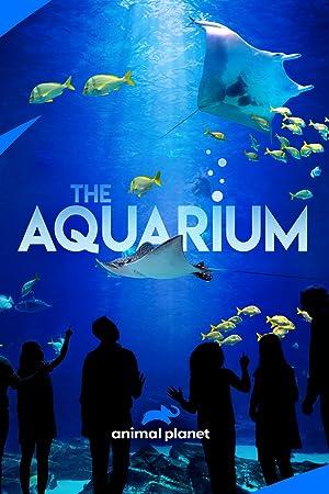 Where to stream The Aquarium