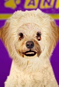 Primary photo for Animal TV
