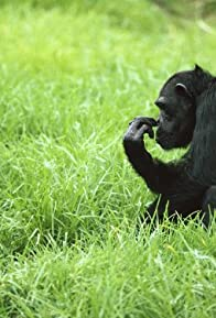 Primary photo for Among the Wild Chimpanzees