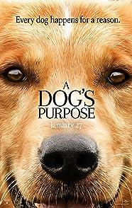 A Dog's Purposeหมา เป้าหมาย และเด็กชายของผม