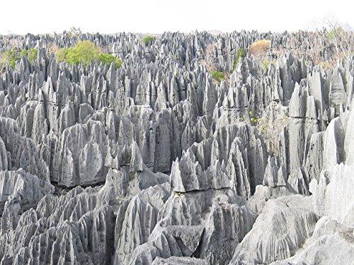 nicole petallides rock