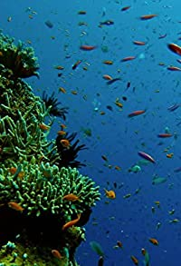 Primary photo for Reef to Rainforest