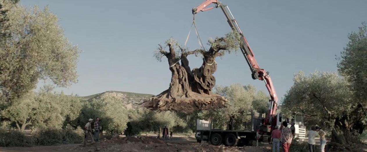 El olivo (2016), dirigida por Icíar Bollaín