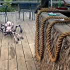 Griff Furst in Arachnoquake (2012)