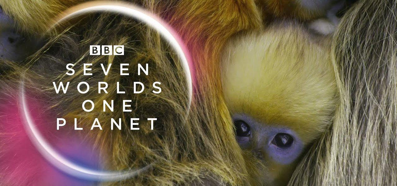 Seven Worlds One Planet (2019) Serial Documentar Online