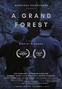 1080p 3d movie clips free download A Grand Forest by none [avi]