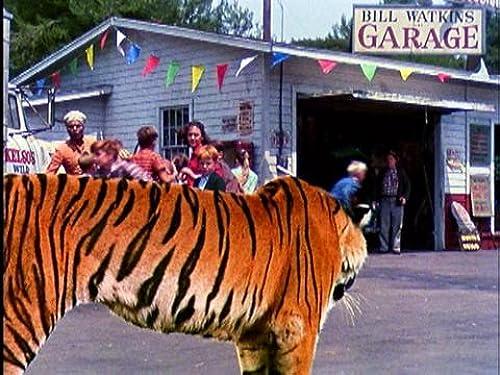 A Tiger Walks
