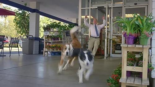 Doritos Dogs