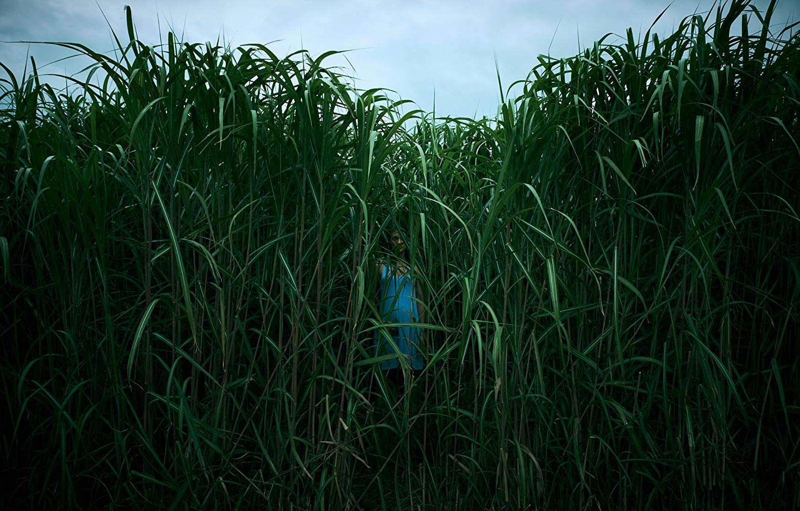 Laysla De Oliveira in In the Tall Grass (2019)